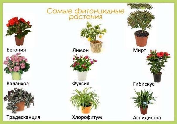 Цветы в детскую